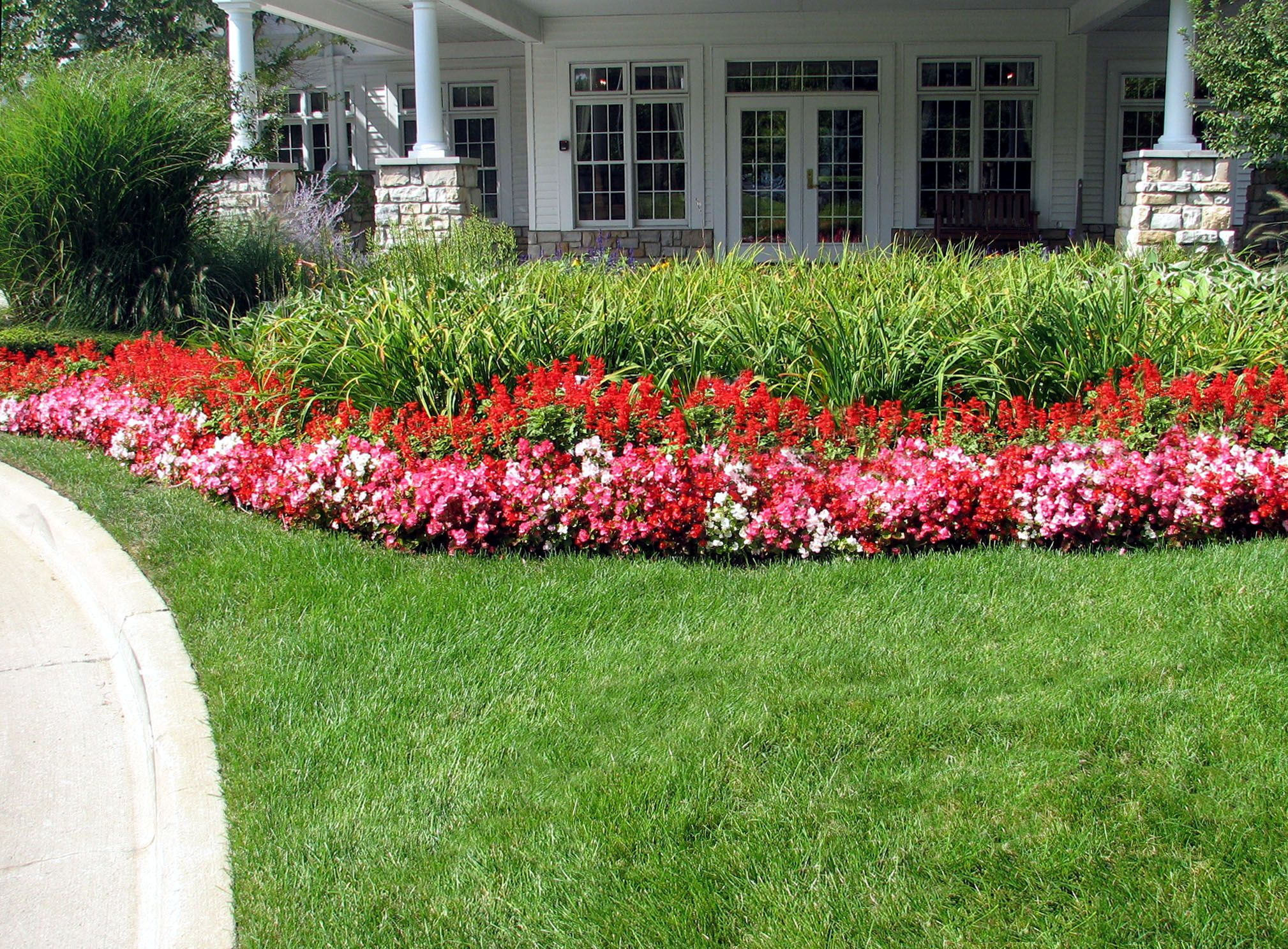 Red Salvia And Begonias Provide A Warm Blast Of Color In Front Of Day Lilies Outdoor Gardens Patio Garden Day Lilies