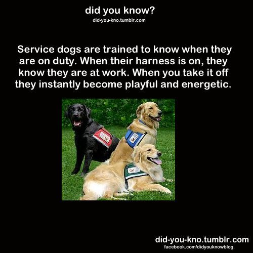 This Is So True So Proud To Have Been Part Of A Service Dog In