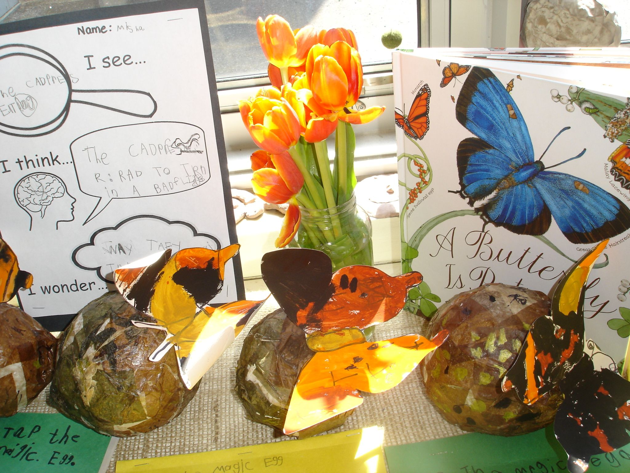 The Butterfly Inquiry
