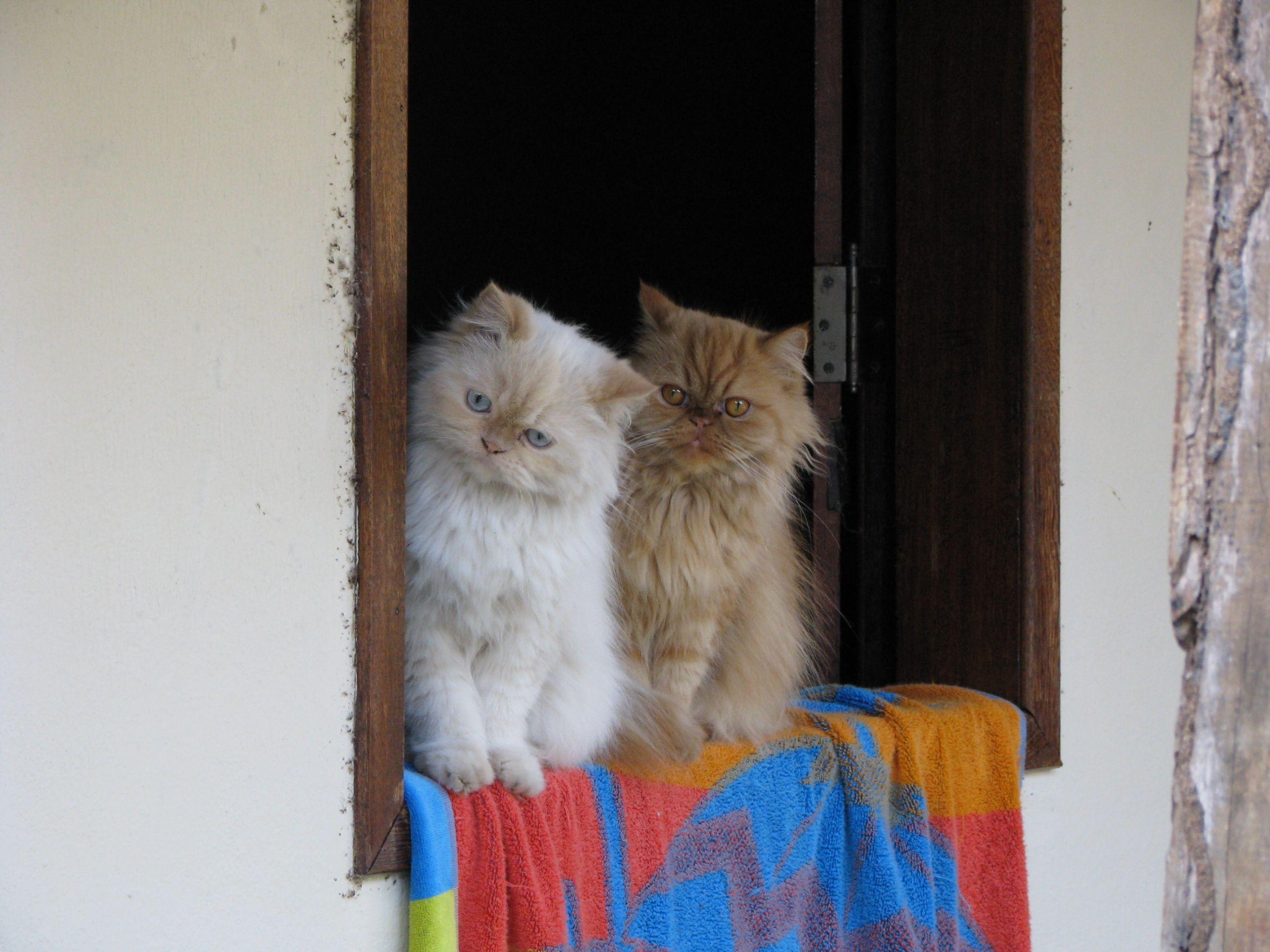 No sítio Cute animals, Here kitty kitty, Fuzzy wuzzy