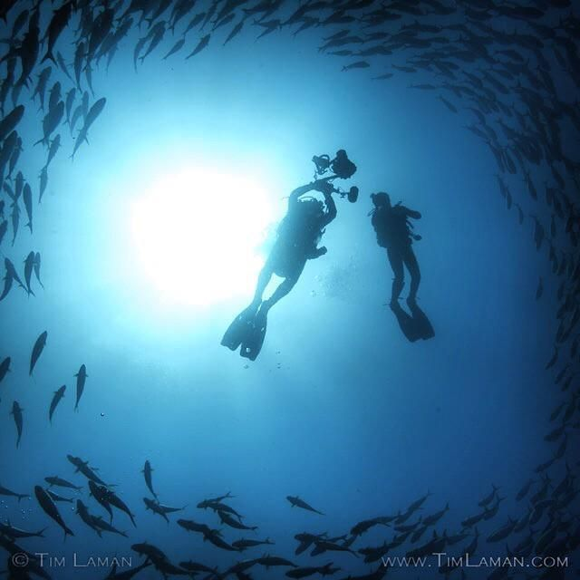 On Our Second Day Of Diving In Coiba National Park Panama A Large School Of Fish Called Blu Instagram Photo Video Instagram