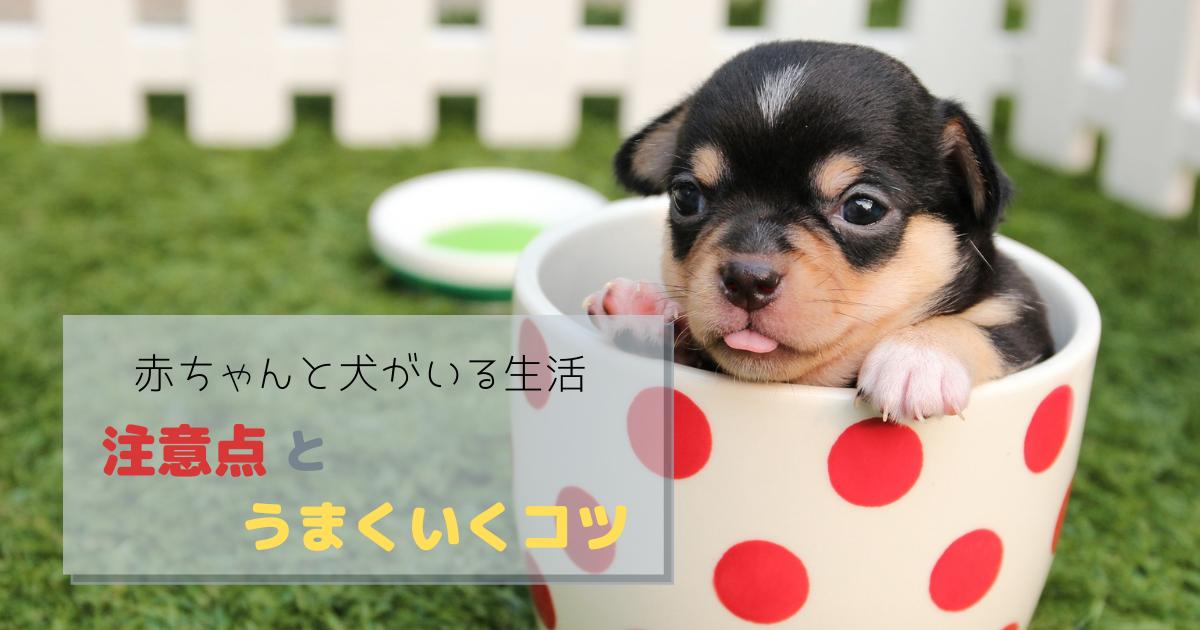 犬と赤ちゃんがいる生活 犬 赤ちゃん 犬 愛玩動物