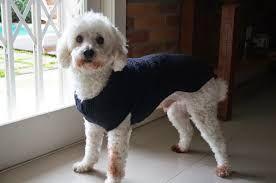 Resultado de imagem para roupas de crochê para cães e gatos