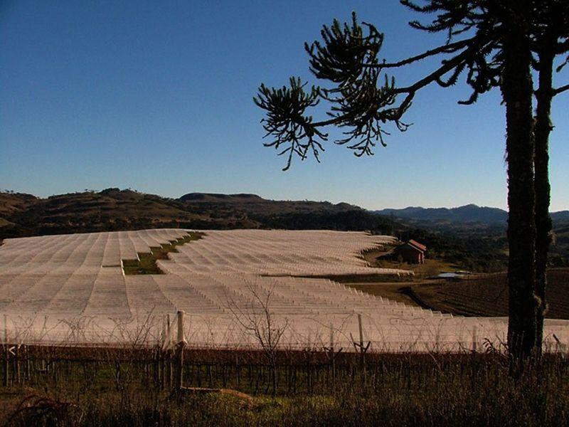 Vinícola Villa Francioni sao joaquim foto por secretaria turismo prefeitura sao joaquim