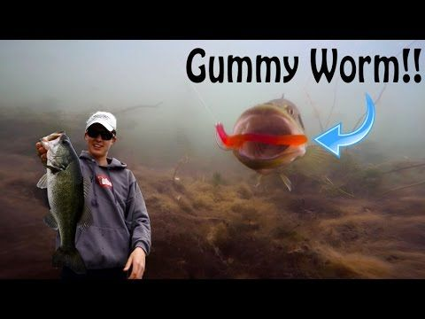 Fishing with gummy worms