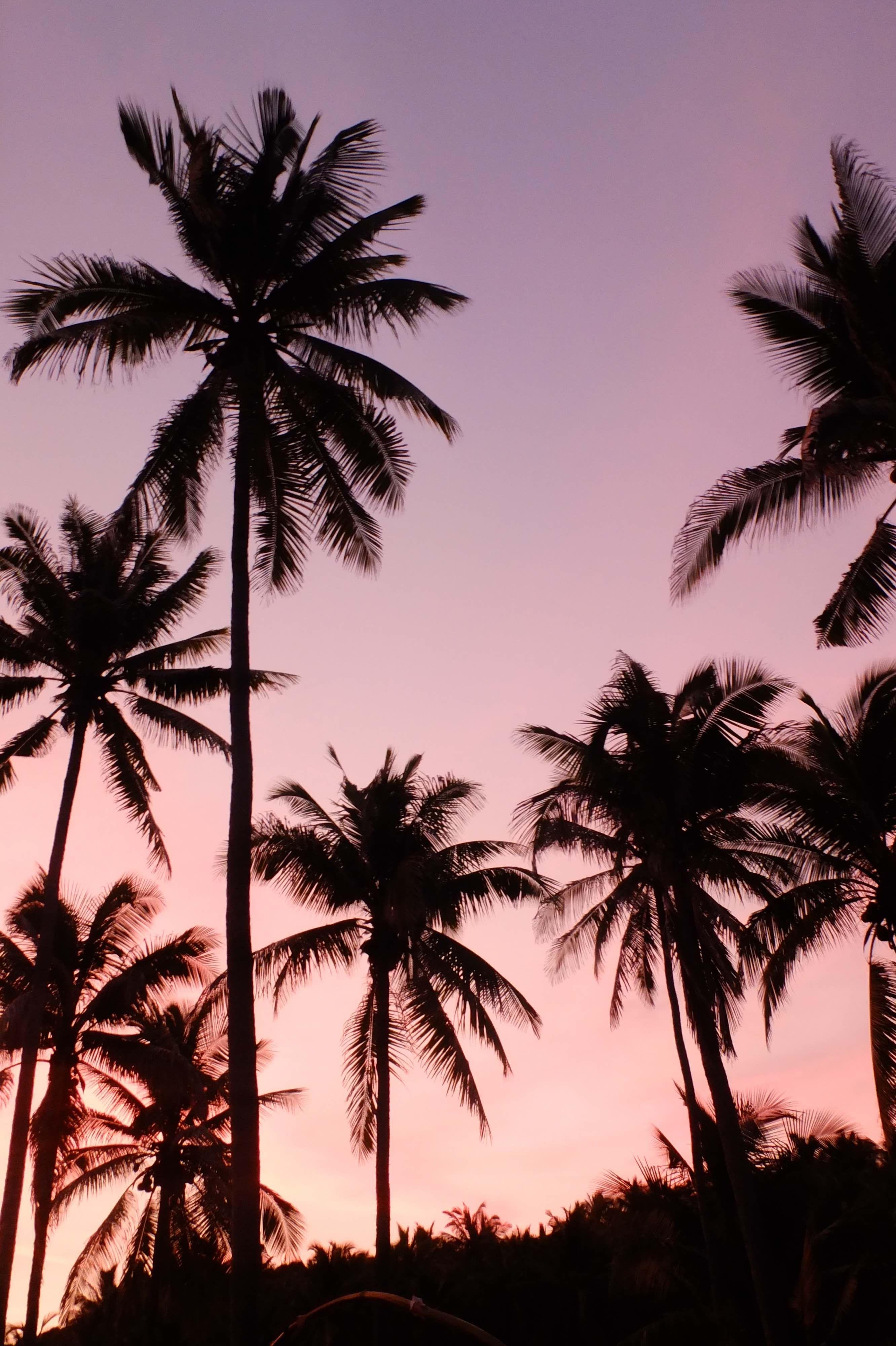 Sunset In Pink Violet Blue Coulours Pastels Pk214 Fondos De Pantalla Palmeras Fondos De Palmeras Fondos Para Iphone