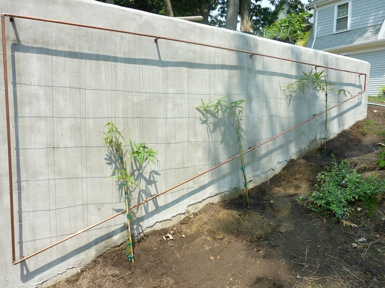Copper And Wire Trellis With Rubus Calycinoides Planted Against Brick Wall