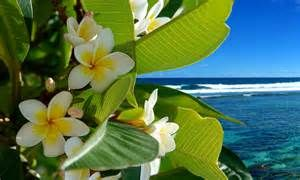 Tropical Flowers Ocean Beach Vacation Hd Wallpaper 1706898