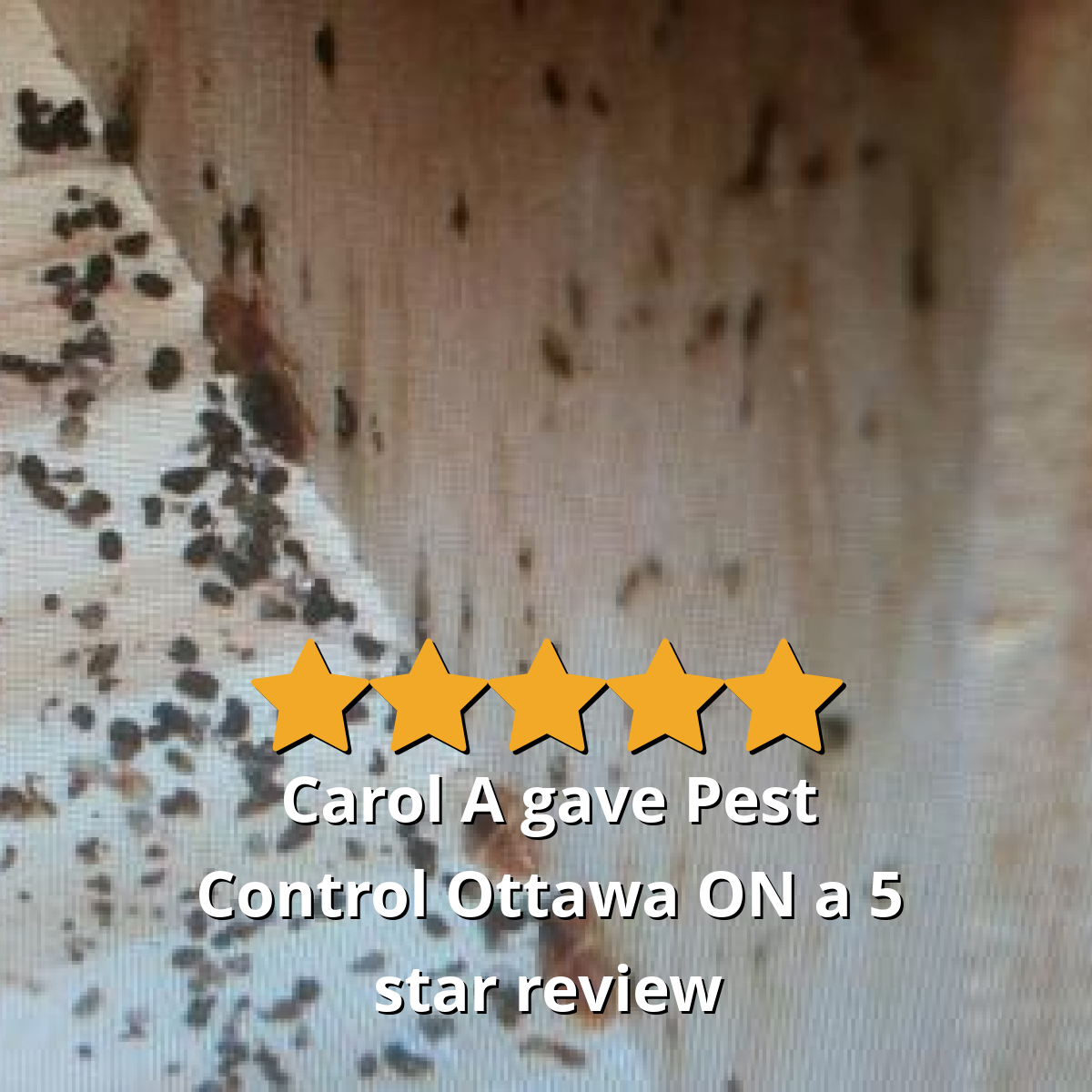 Carol A gave Pest Control Ottawa Inc. a 5 star review