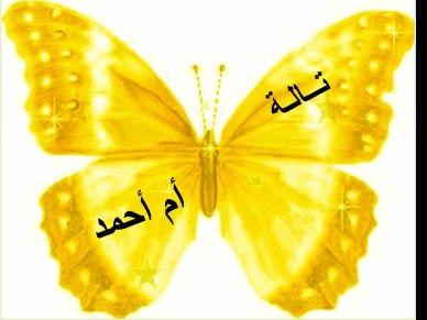 توزيعات العيد فراشات اسم الموزعة ف الاسفل و اسم الطفل ف الاعلى Imagenes De Mariposas Mariposas
