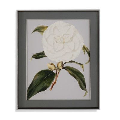House of Hampton Camellia Japonica I Framed Painting Print
