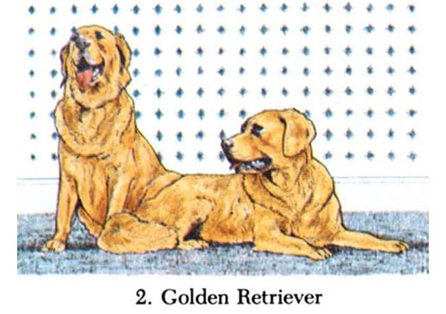 Golden Retriever Puppies Coloring Pages - Coloring Home | 457x650