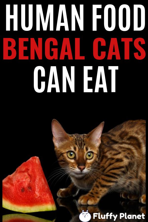 Human Food Bengal Cat Can Eat Bengal Cat Bengal Human Food