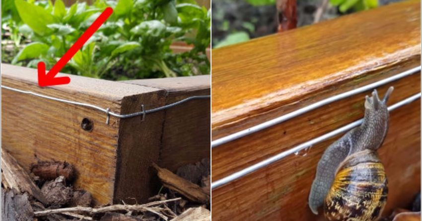 How To Make A 9 Volt Electric Fence To Keep Snails Slug S Out Of