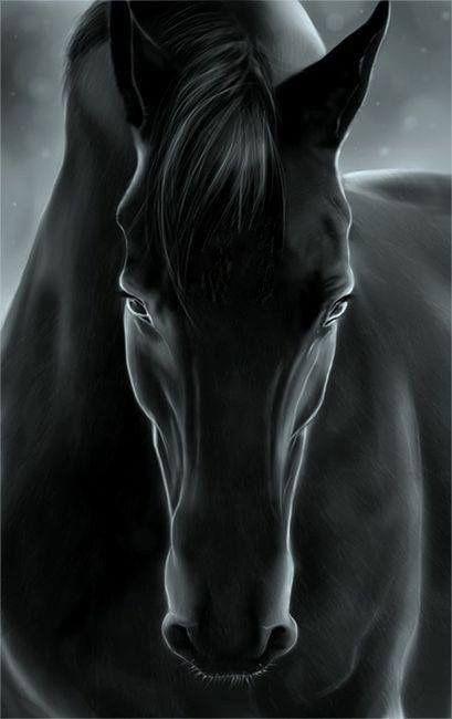 Black Horse Horses Beautiful Horses Animals