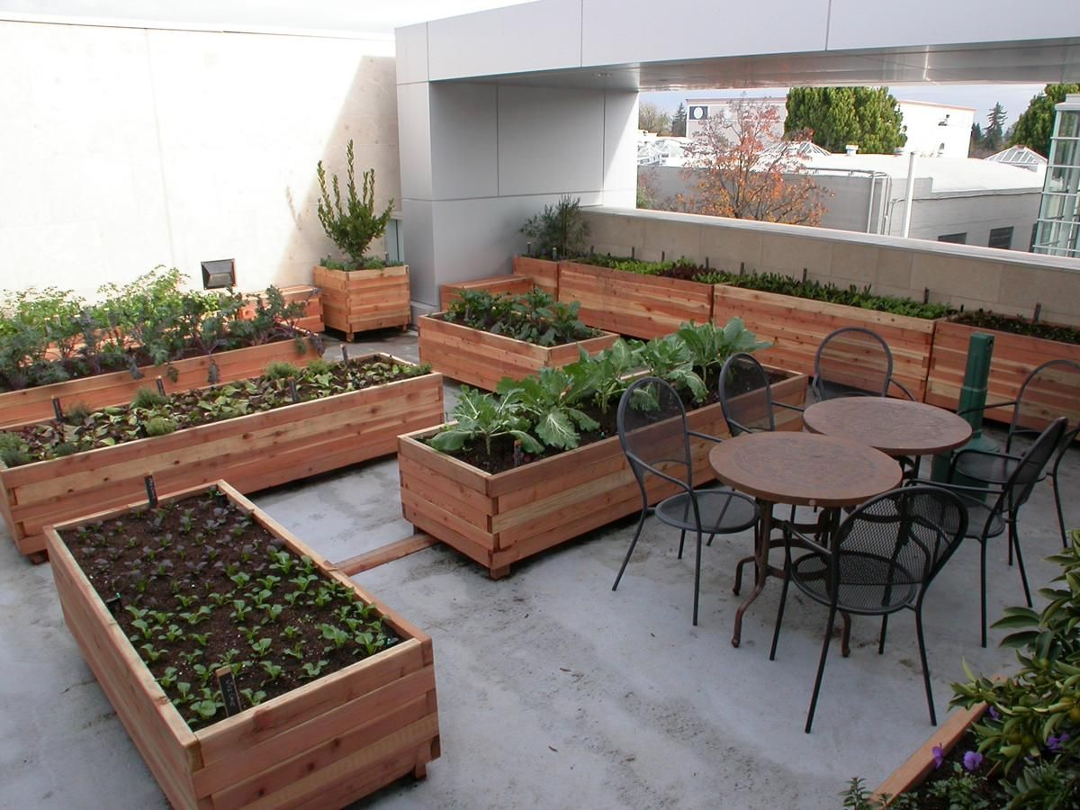 Rooftop Kitchen Garden Before After Photos Of A Rooftop Kitchen Garden Homestead