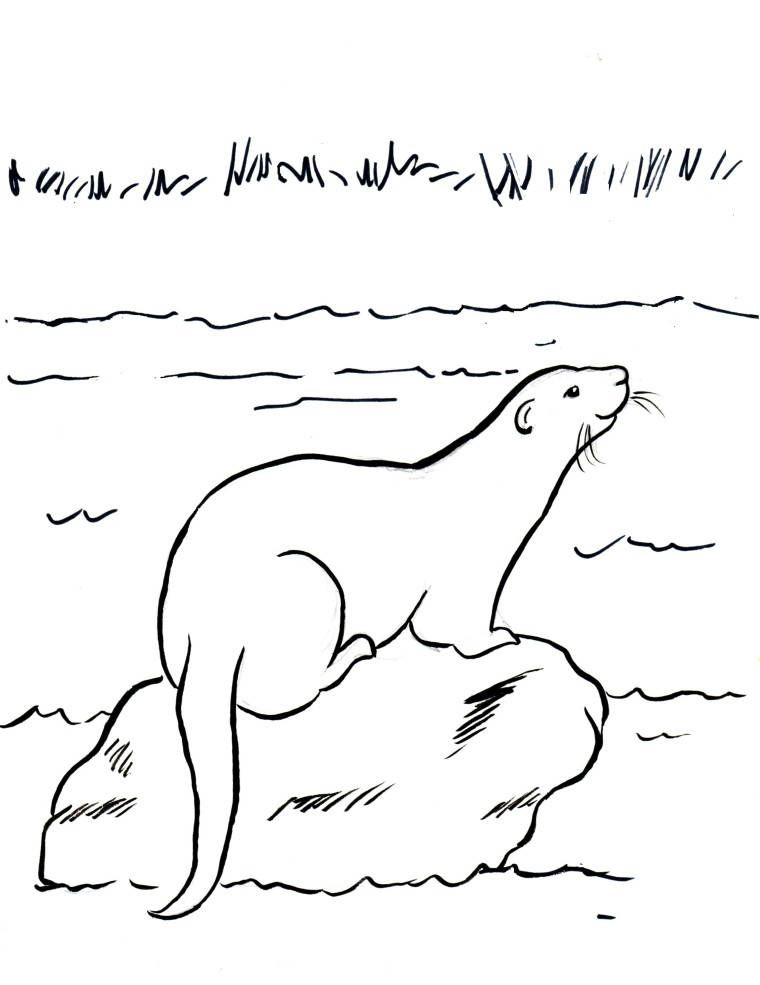 Simple River Otter Coloring Page Otter Is A Semi Aquatic Animal