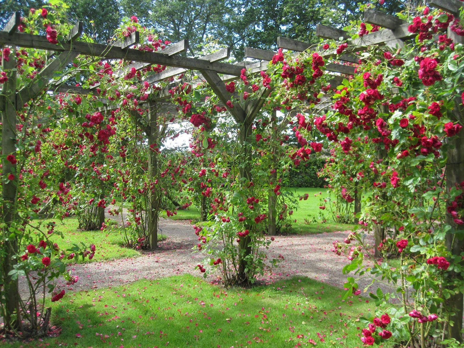 Backyard rose garden - Garden Planning