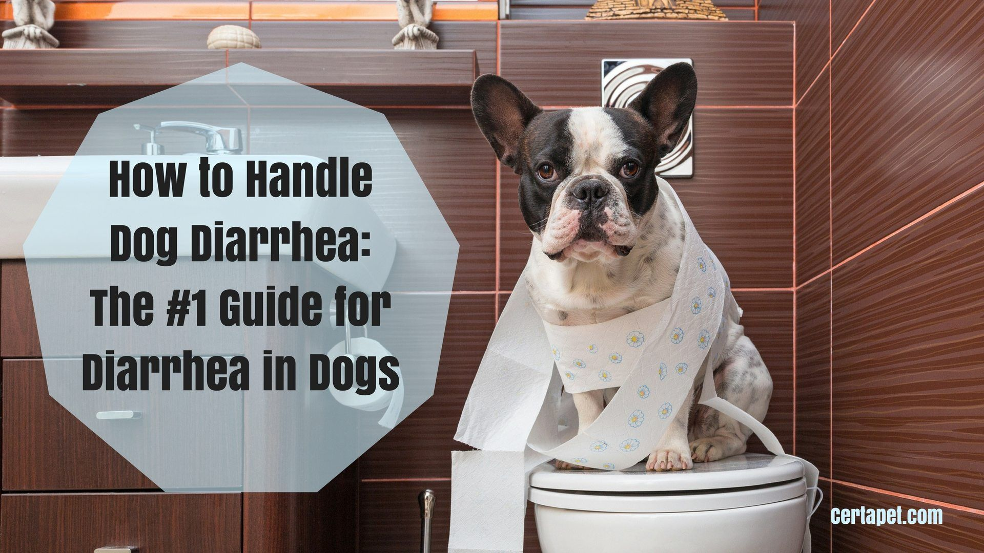 How To Handle Dog Diarrhea The 1 Guide For Diarrhea In Dogs
