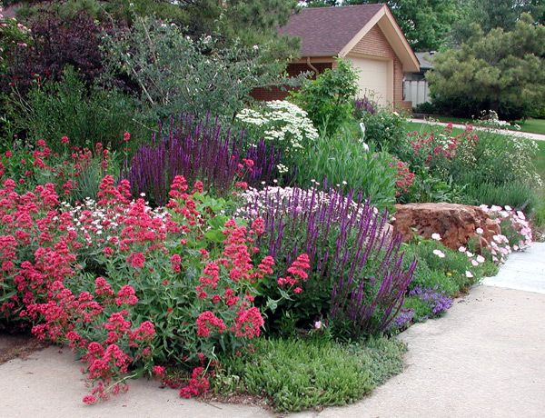Established xeric garden they feature gardens with low for Low water landscaping plants