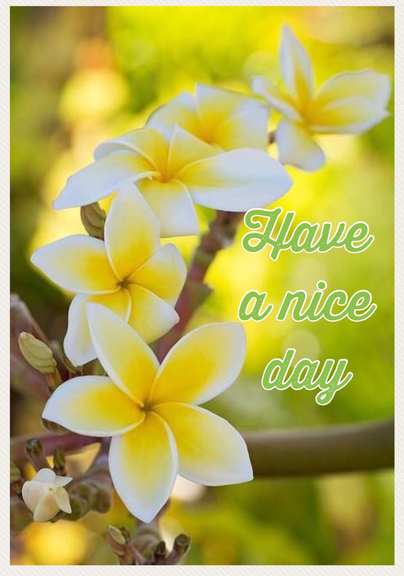 Have A Nice Day Littles Pinterest Flowers Beautiful Flowers