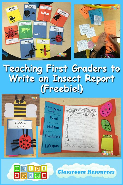 Teaching First Graders to Write an Insect Report (Freebie