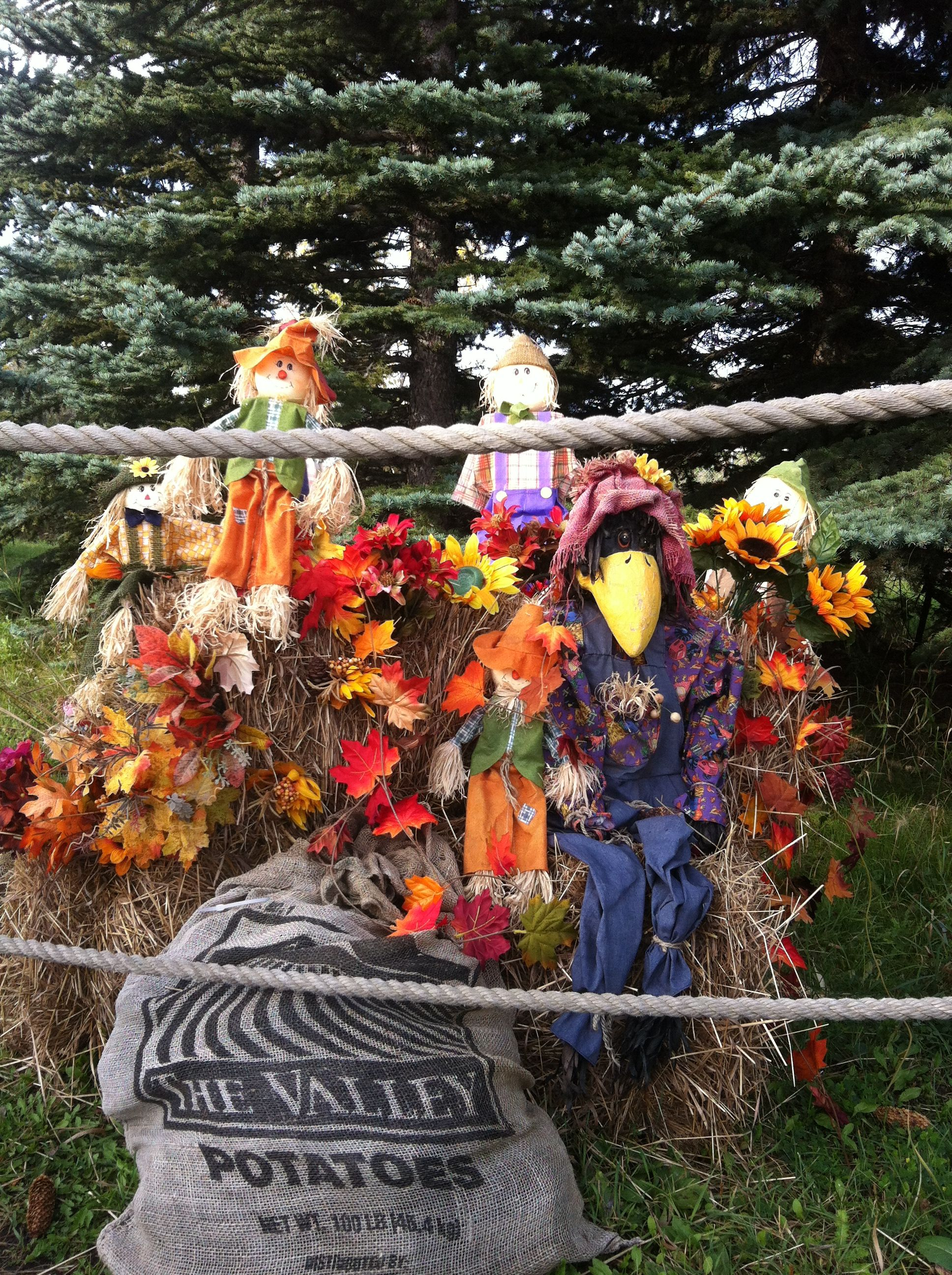 Fall Decor Scarecrows Hay Bales Fake Leaves And Crows All
