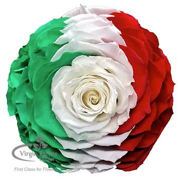Mexico Preserved Flag Rose Virgin Farms Direct First Class For Flowers Preserved Roses Rose Flowers