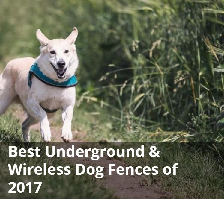 Best Underground Wireless Dog Fences Of 2017 Review And Buying Guide Paw Castle