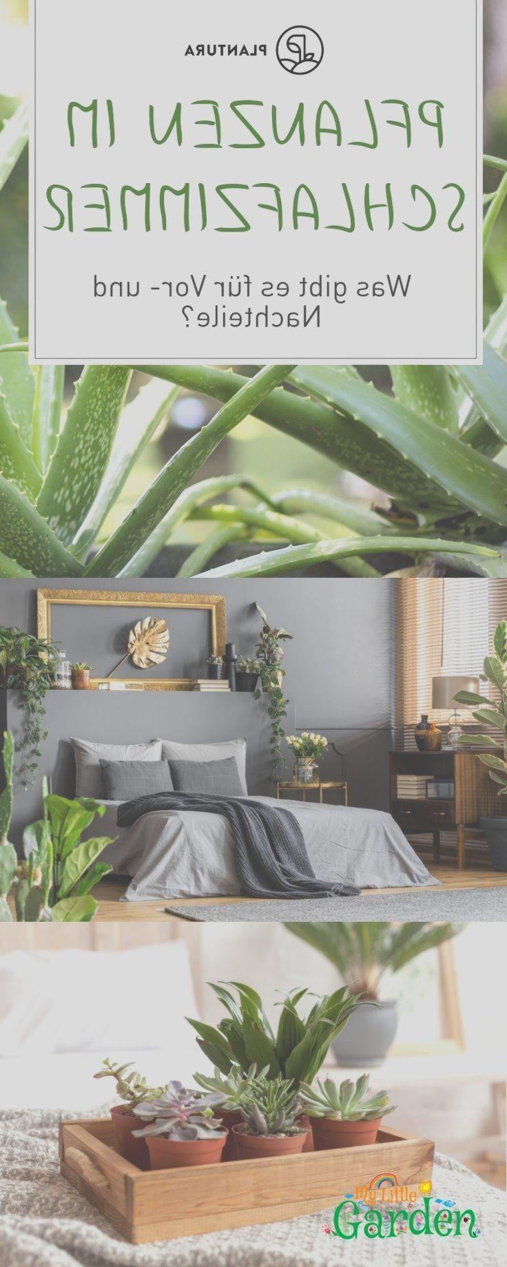 Pflanzen im Schlafzimmer: Vorteile, Nachteile und geeignete Arten - #Arten #geeignete #Nachteile #Pflanzen #Schlafzimmer #und #Vorteile #pflanzenimschlafzimmer Pflanzen im Schlafzimmer: Vorteile, Nachteile und geeignete Arten - #Arten #geeignete #Nachteile #Pflanzen #Schlafzimmer #und #Vorteile #pflanzen schlafenzimmer, #pflanzenimschlafzimmer Pflanzen im Schlafzimmer: Vorteile, Nachteile und geeignete Arten - #Arten #geeignete #Nachteile #Pflanzen #Schlafzimmer #und #Vorteile #pflanzenimschlafz #pflanzenimschlafzimmer