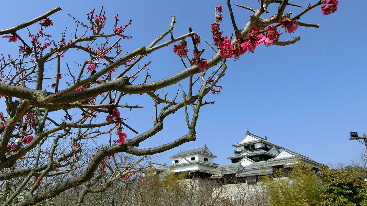 At the time of our visit it is the Start of peach blossom season in Matsuyama.