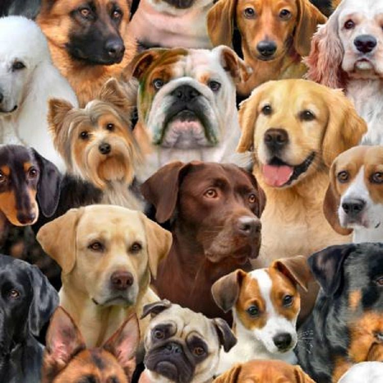 Elizabeths Studios Dog Breeds Quilt Fabric Fat Quarter