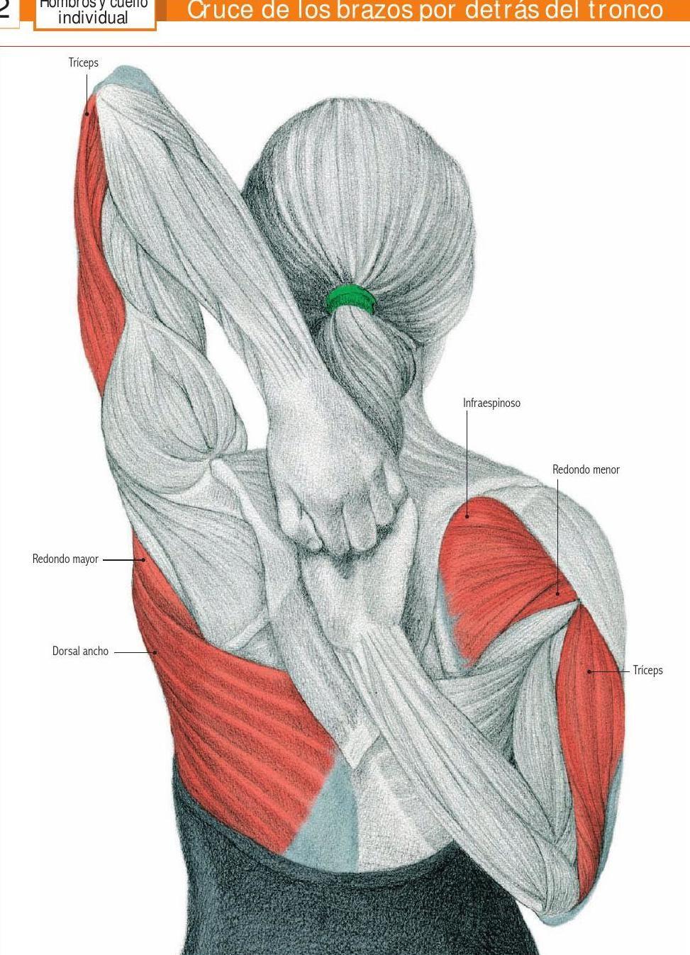 Estiramiento de triceps y dorsal. | Gym | Pinterest | Dorsales ...
