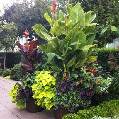 potted canna lily design ideas