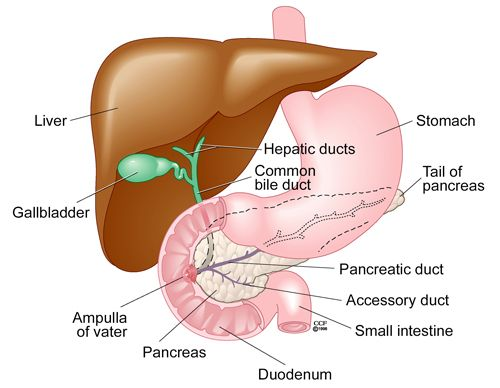 Signs and Symptoms of Gallstones