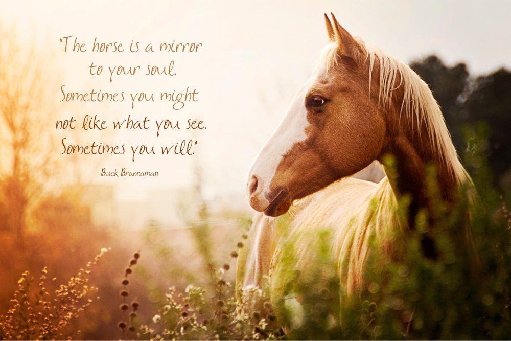 El caballo es un espejo de su alma a veces puede que no for Espejo que no se empana