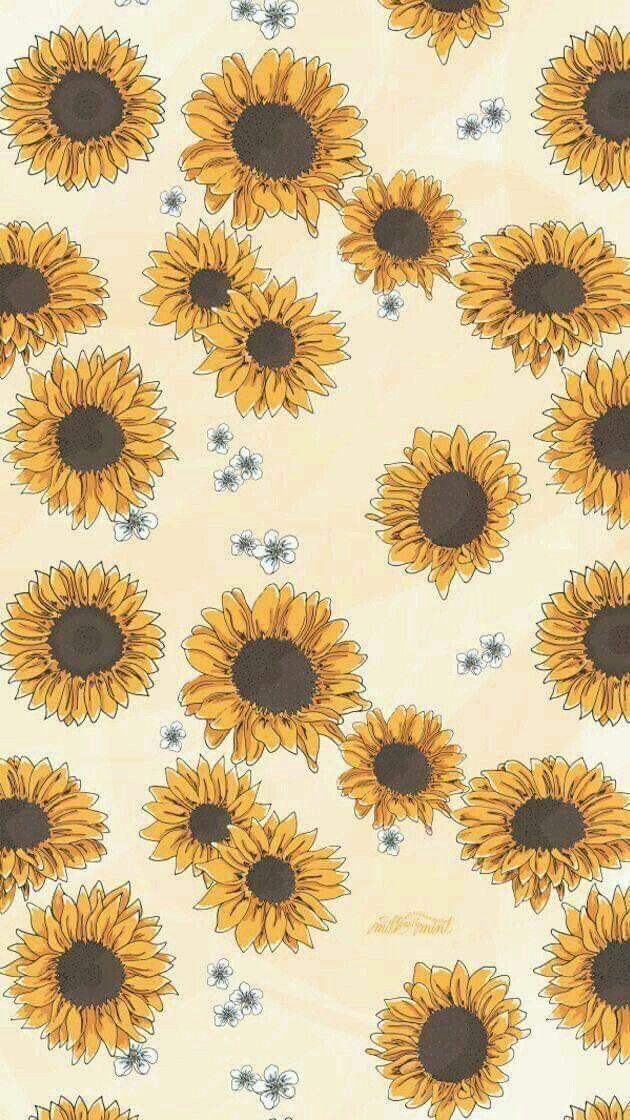 Click Here To Download Download Cute Wall Sunflower Wallpaper Backgrounds Phone Wallpapers Iphone Wallpaper Vsco