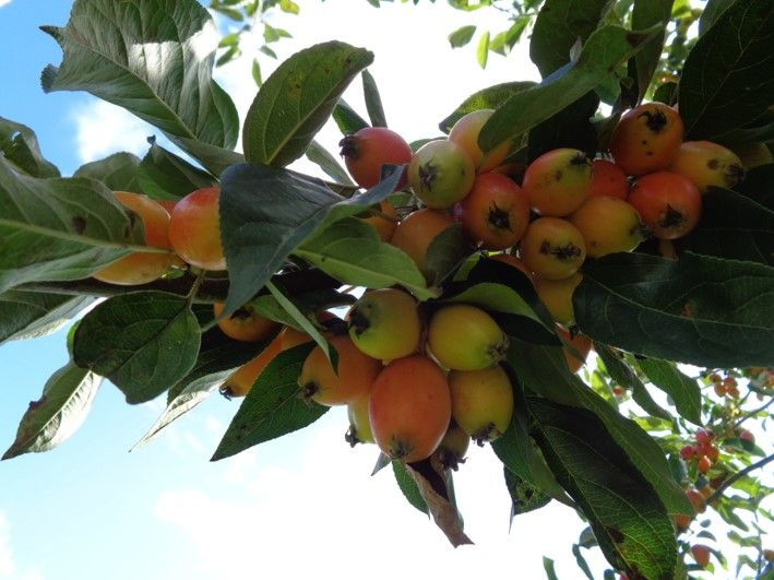 Edible fruits and berries (and some poisonous ones too ...