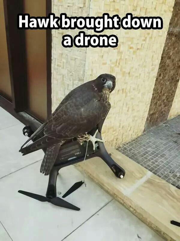 drone actualité