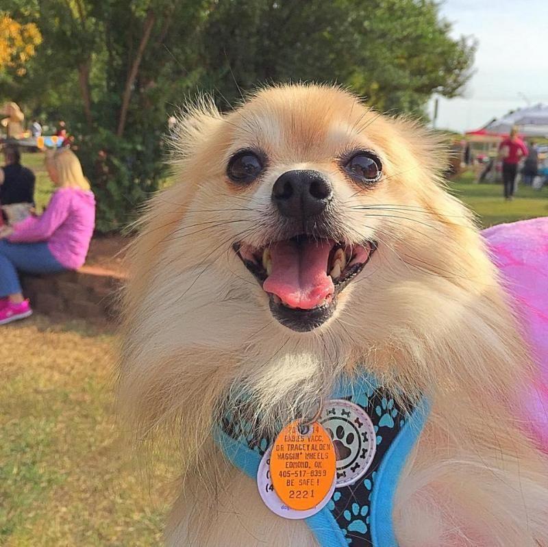 Puppy paws rescue petfinder