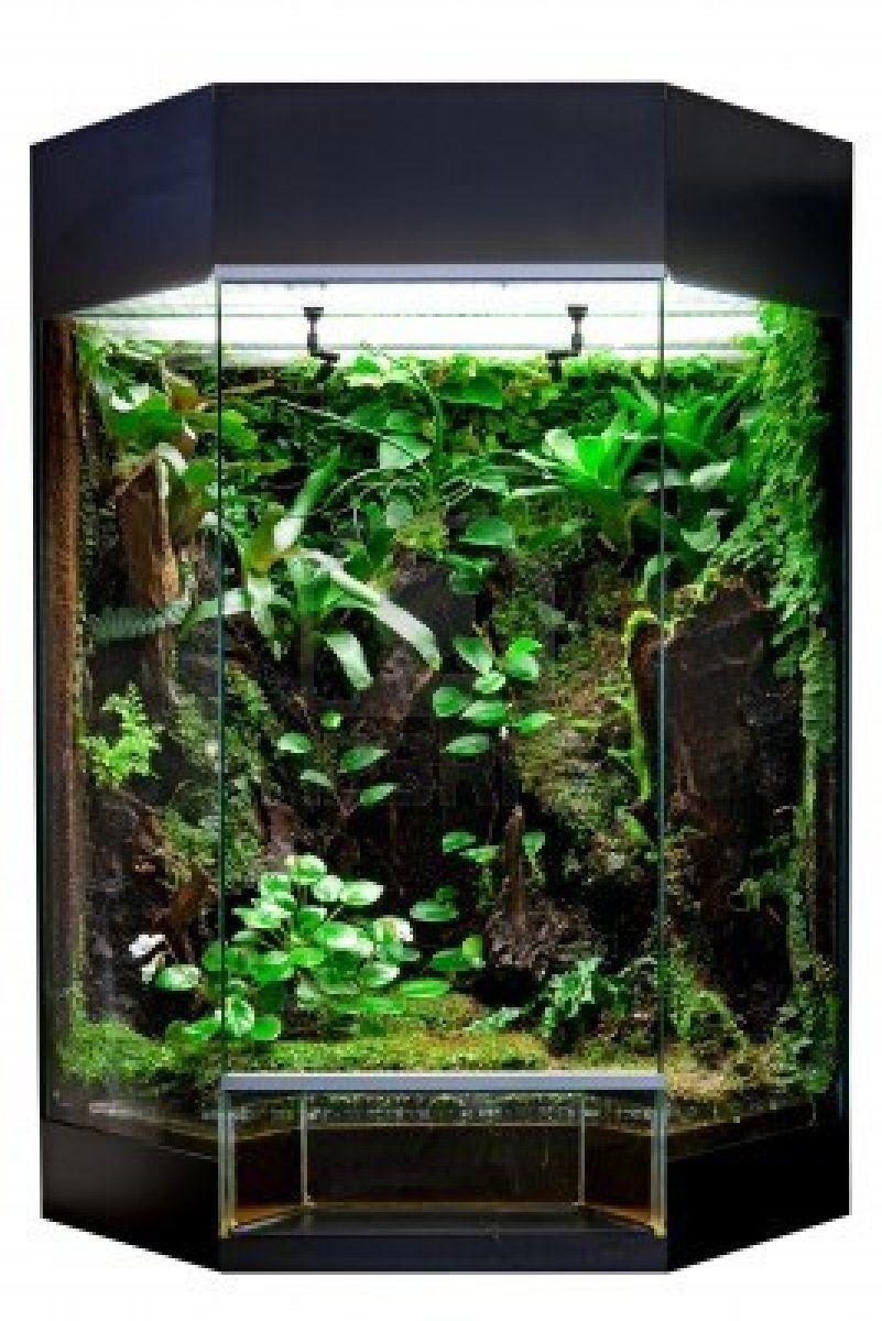 Terrarium Or Vivarium For Keeping Rainforest Animal Such As Poison