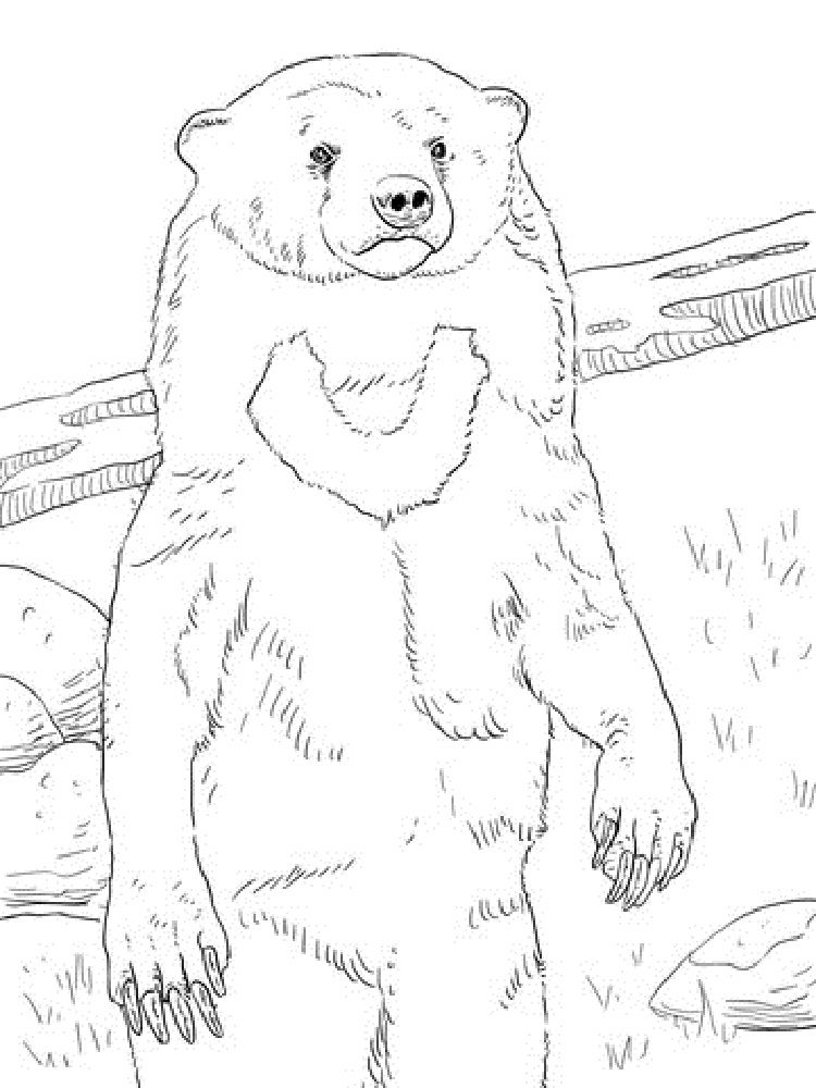 Sun Bear Coloring Pages Bear Coloring Pages Disney Princess