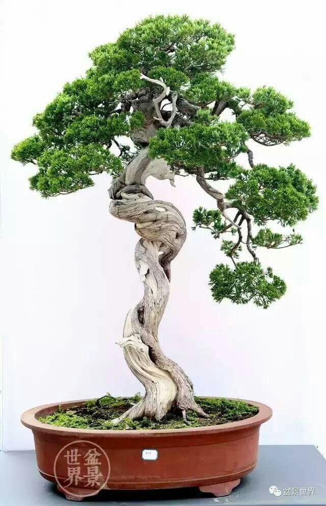 Pin Von Sai Tam Auf Bonsai Bonsai Asiatischer Garten Und Garten