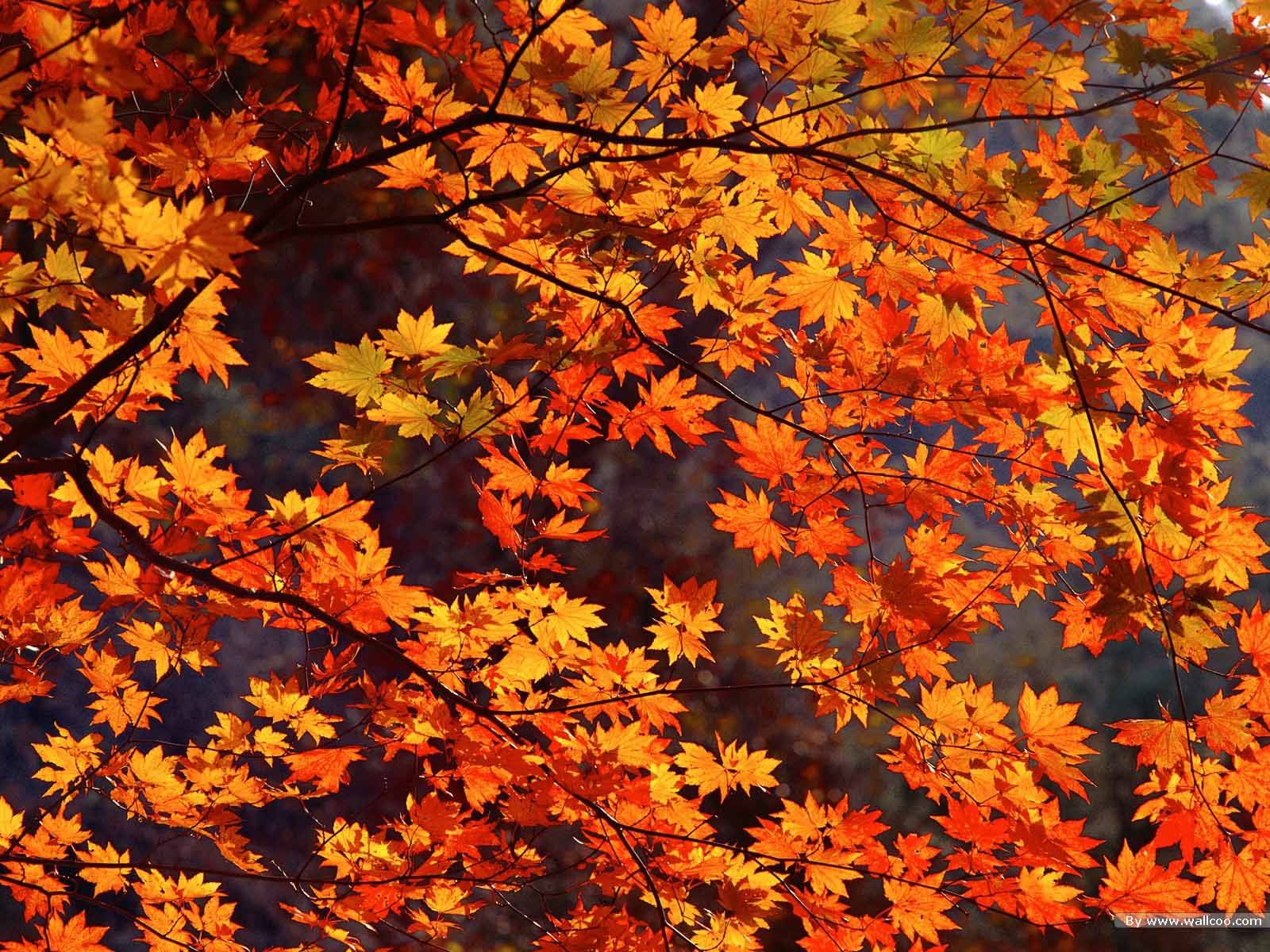 Free Desktop Wallpaper Autumn Leaves: Free Fall Photos For Desktop