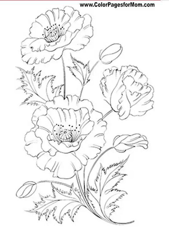 Pin de Irma Olga en Dibujar Flores, etc.