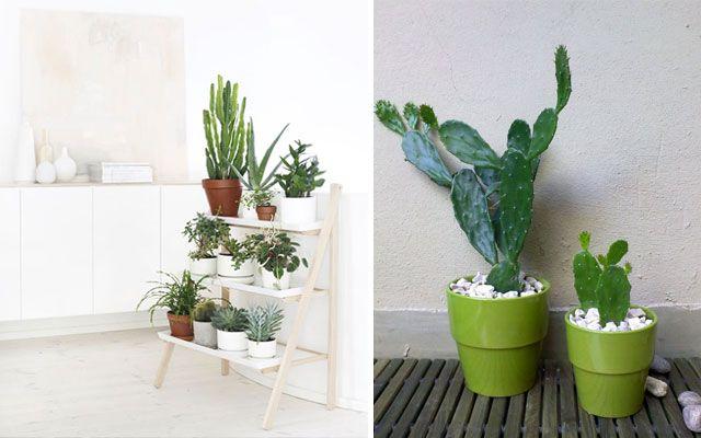 Ideas para decorar con cactus me encanta la idea de la escalera