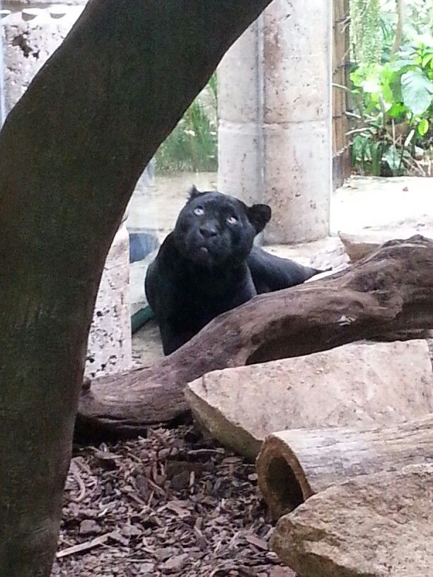 #Puma #Dallas #Aquarium ... didnt like he didnt have much room to run around :(