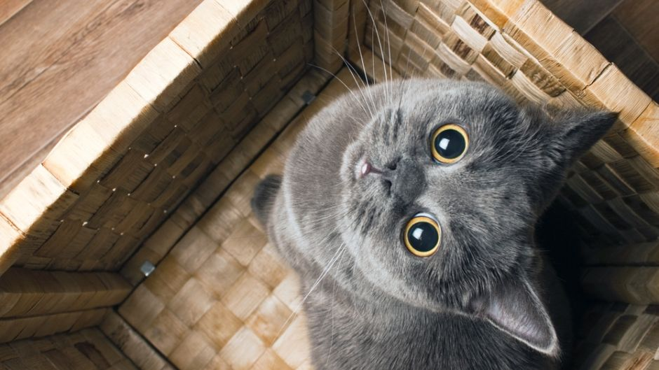 Best Cats For Apartments The Perfect Feline Friend Rent Blog Grey Cats Cool Cats Pet Warehouse