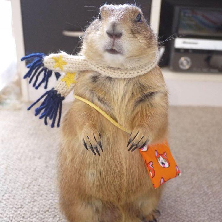 Mugimugikoのinstagram写真をチェック いいね 259件 プレーリードッグ 動物 かわいい 可愛い 動物