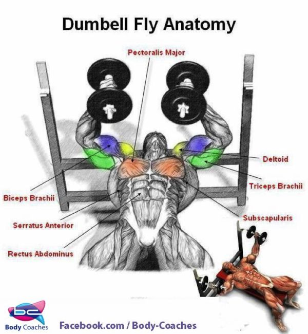 Dumbbell Chest Workouts For Men: Muscle Fitness, Workout